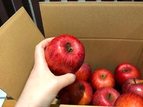 加工用りんごの販売開始のお知らせ